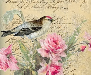 bird, roses, and vintage image