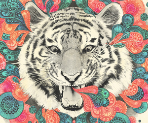 tiger, colors, and animal image