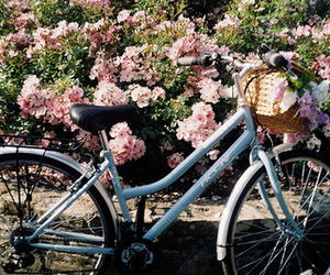 flowers, bicycle, and nature image