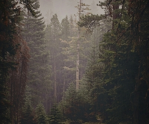 forest and nature image