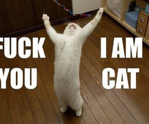 cat, fuck, and humor image