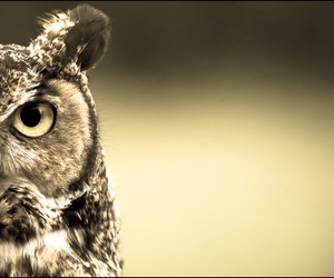 eyes, owl, and fly image