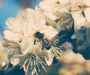 bee, flower, and pretty image