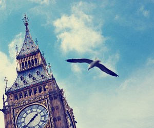 london, bird, and sky image