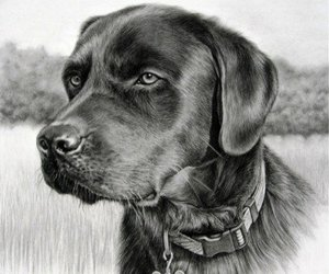 dog, drawing, and black and wight image