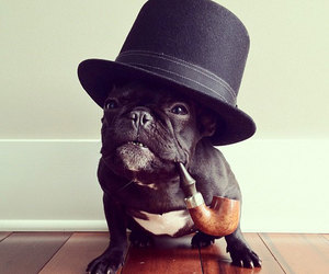 adorable, black, and hat image