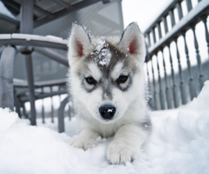 dog, snow, and photo image