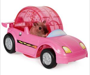 hamster, animal, and car image