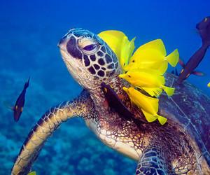 fish, turtle, and sea image
