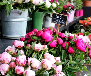 flowers, girly, and paris image