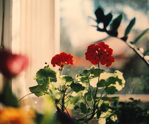 flowers, red, and window image
