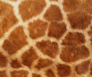 background, giraffe, and cute image