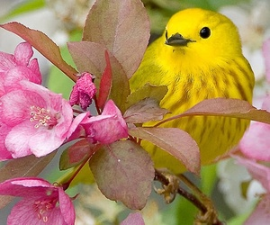 bird, beautiful, and cute image