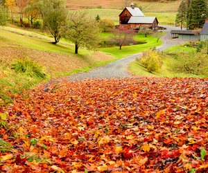 autumn, Country House, and farm image