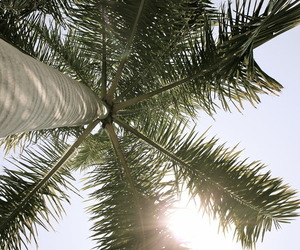 summer, palms, and sun image