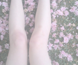 flowers, pale, and pink image