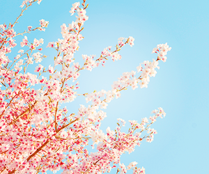 flower, tree, and japan image