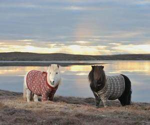 pony, scotland, and sweater image