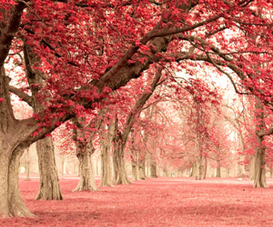 autumn, pink, and leaves image