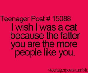 cat, fat, and teenager post image