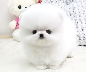 lovely and puppie image