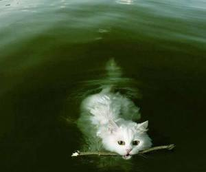 cat, friendship, and water image