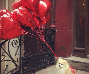 balloons, dog, and cute image