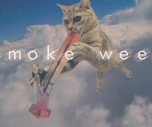 weed, cat, and smoke image