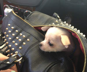 cute, puppy, and bag image