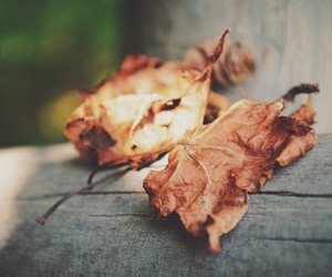 fall, leaves, and photography image
