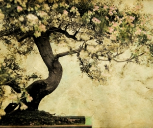 tree, bonsai, and flowers image