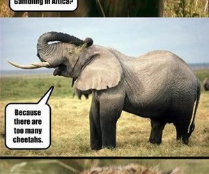 funny, cheetah, and elephant image