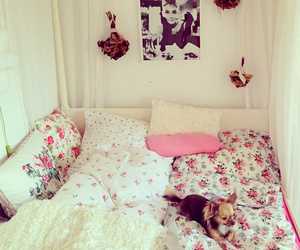 room, dog, and pink image