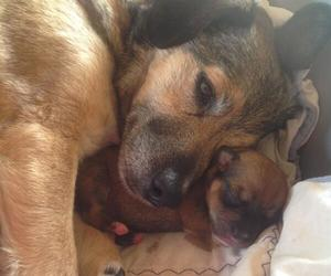 dogs, pets, and mother image