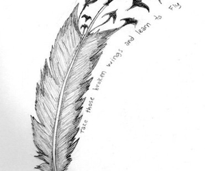 bird, fly, and feather image