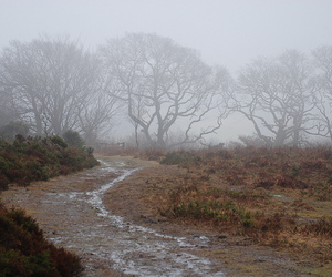 trees, exmoor, and haddon hill image