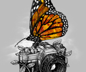 butterfly, camera, and art image