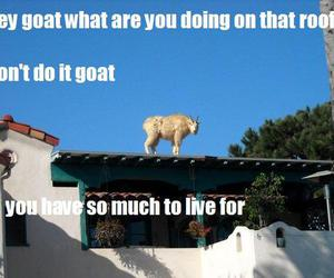 funny, goat, and suicide image