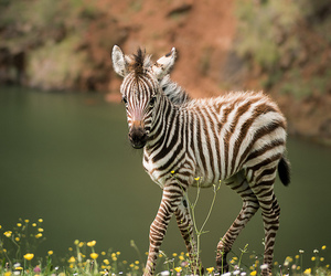 animal and zebra image