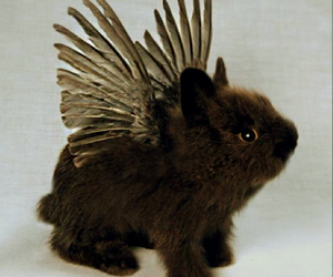 angel, taxidermy, and bunny image