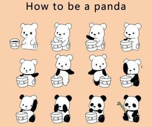 panda, cute, and funny image