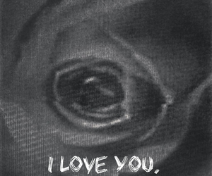black and white, I Love You, and rose image