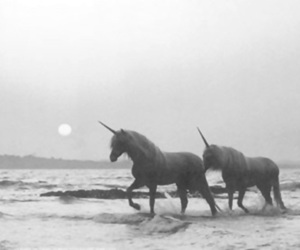 black and white, horse, and ocean image