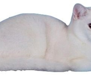 cat, transparent, and white image