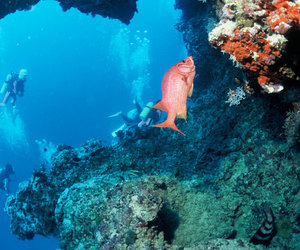scuba diving, dives, and adventure in hong kong image
