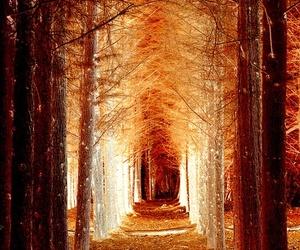 beautful, walk, and perfect image