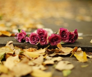 flowers, rose, and autumn image