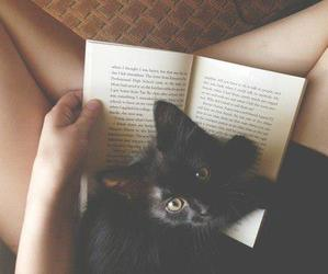 cat, book, and black image