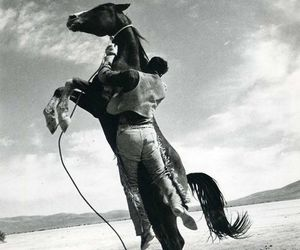 horse, photography, and black and white image