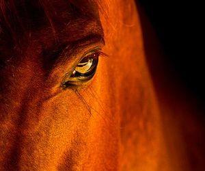 horse, eye, and animal image